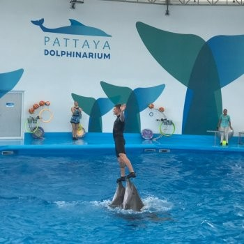 Новый Дельфинарий в Паттайе (Pattaya Dolphinarium)
